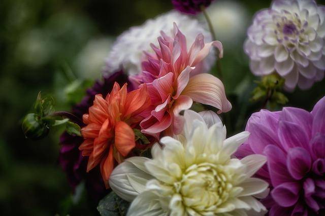 barevné květy