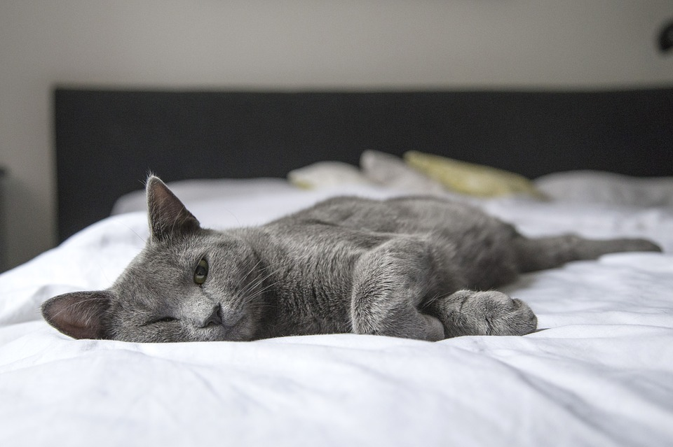 kočka na posteli